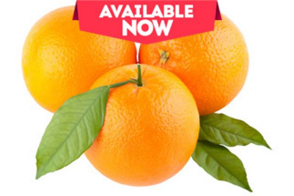 orange-avlE78E09AE-919D-91BF-D532-5DBAD09B121E.jpg